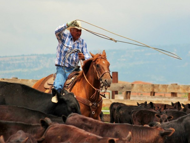 Courtesy photo 2021 Wyoming Cowboy Hall of Fame Inductee Jim Caines of Hyattville working cattle on the ranch.