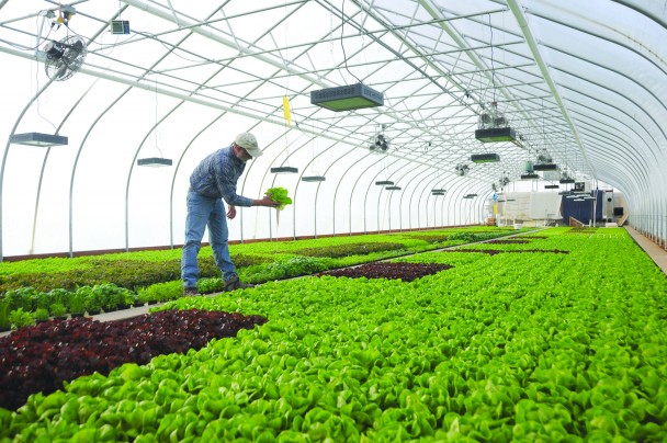 Dwight Koehn works at the greenhouse in the Greybull Business Park.